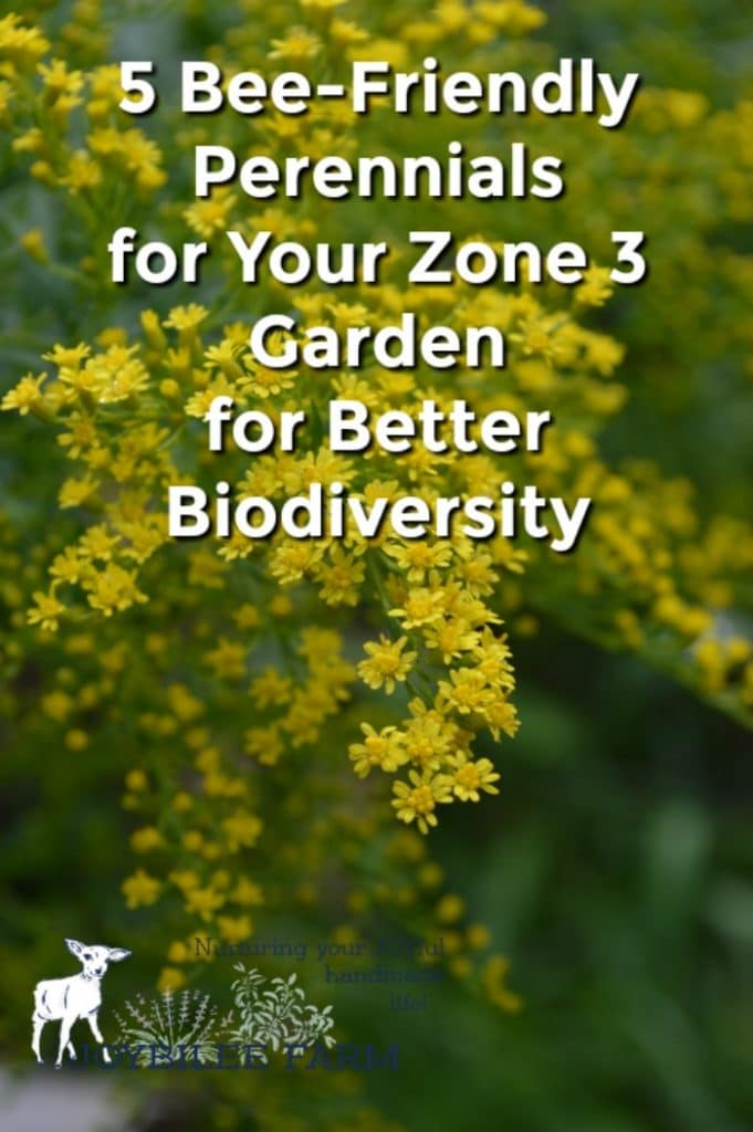 5 bee friendly perennials for your zone 3 garden for better biodiversity golden rod in bloom mightylinksfo