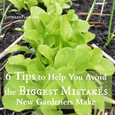 6 Tips to Help You Avoid the Biggest Mistakes Newbie Gardeners Make