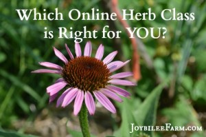 Herbology helps us connect with the depth of herbal knowledge, so that we stop mining herbs, and instead start relating to herbs. Through studying herbs, we make herbs our friends. We get to know them. We touch them, taste them, smell them.