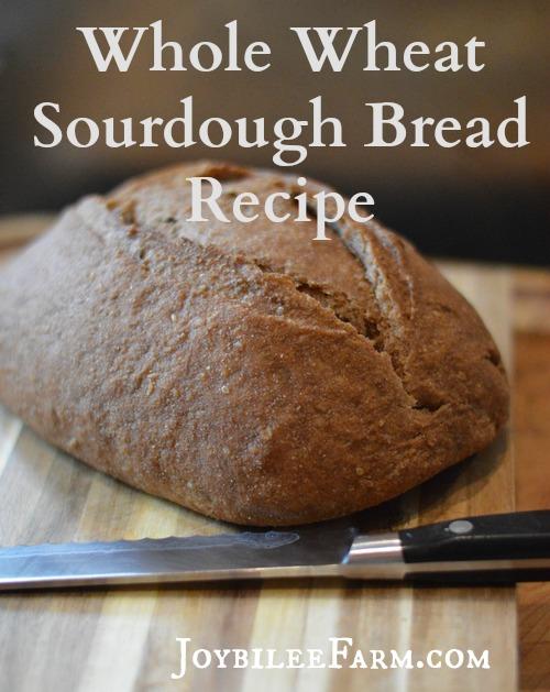 Fresh Whole Wheat Sourdough Bread on a cutting board with a knife