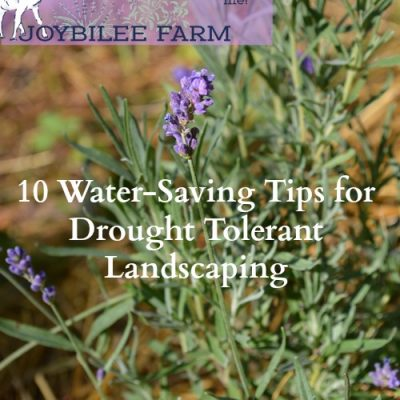 10 Water-Saving Tips for Drought Tolerant Landscaping
