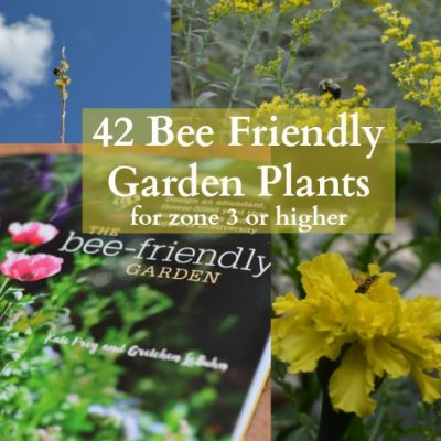42 Bee Friendly Garden Plants for zone 3 or higher