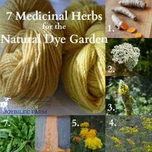 Using these 7 double-duty herbs will give you the three primary colours in your natural dye vat, with cleavers for red, woad for blue, and the 5 other plants for varying shades of yellow.