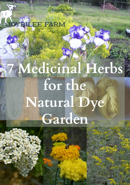 7 Medicinal Herbs for the Natural Dye Garden