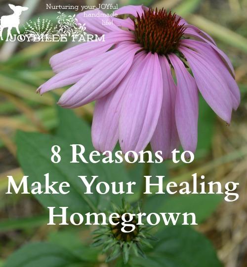 medicinal herbs to grow - echinacea
