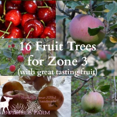 16 Fruit Trees for Zone 3 with Great Tasting Fruit!