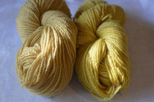 Weld dyed yarn fresh from the dye bath