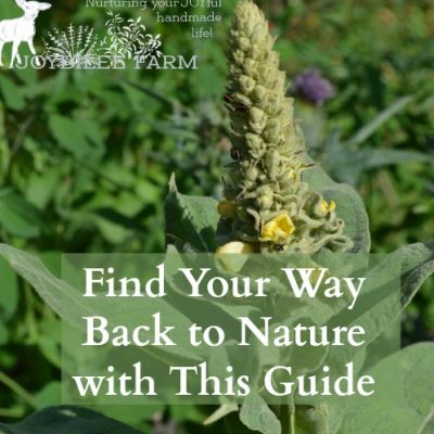 Find Your Way Back to Nature with This Guide