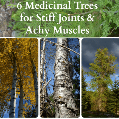 6 Medicinal Trees for Stiff Joints and Pain