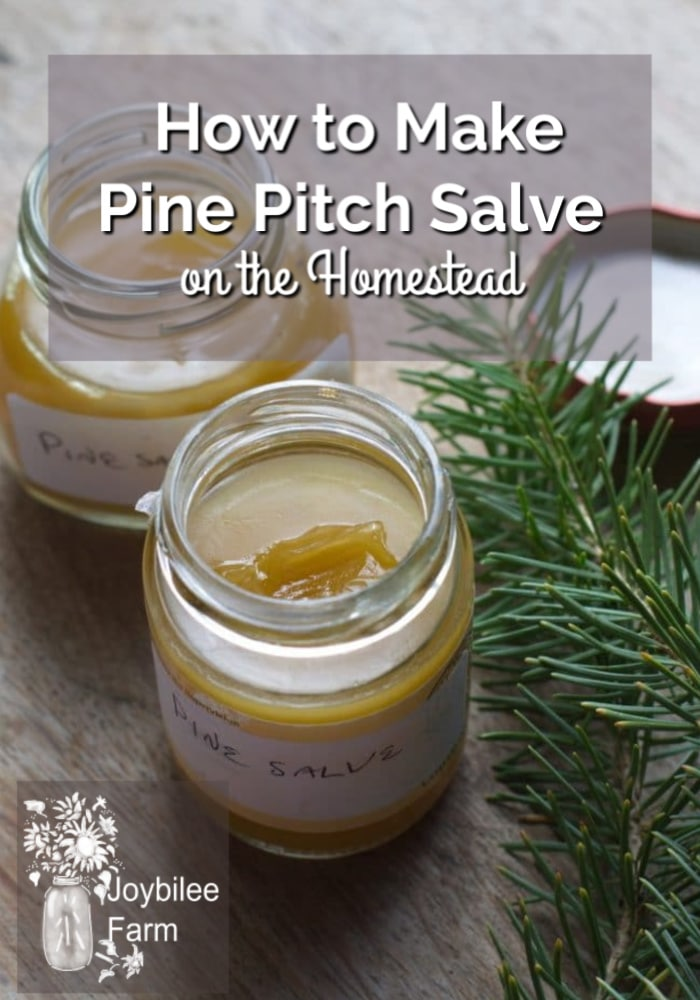 Make pine salve from local trees. It is a traditional drawing salve, that draws infections, slivers, and inflammation out of the body. Pine salve reduces pain and swelling, helping the body heal itself.