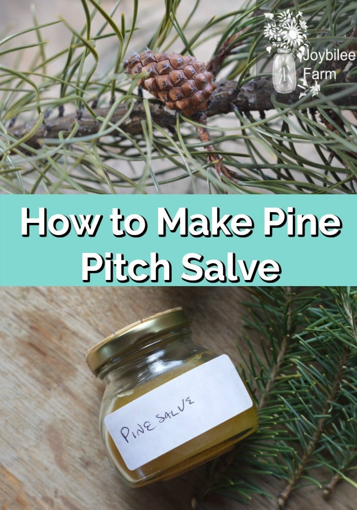How to Make Pine Pitch Salve
