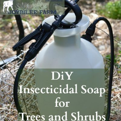 DiY Insecticidal Soap for Trees and Shrubs