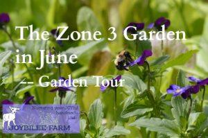 The Zone 3 Garden in June — Growing Herbs