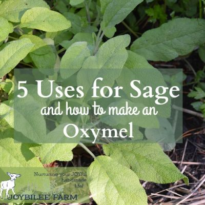 5 Uses for Sage Herb and How to Make an Oxymel