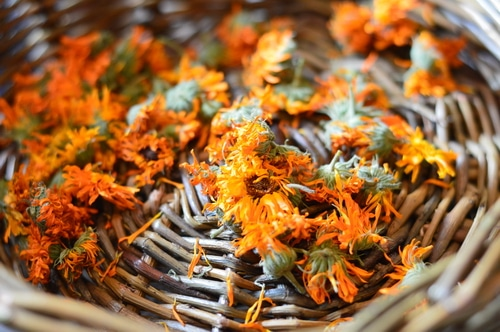 Dried calendula flower heads in a basket