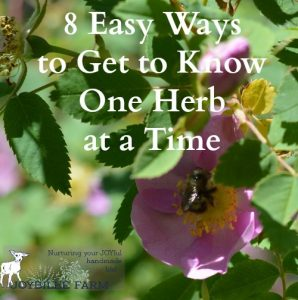 8 Easy Ways to Get to Know One Herb at a Time