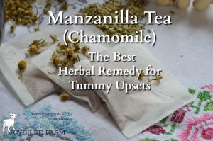 """Chamomile tea, called manzanilla or """"little apple"""" in Spanish, due to its apple-like scent, is one of the best herbal remedies for anxiety and sleeplessness. A cup of manzanilla tea before bed soothes and relaxes the mind, without leaving you groggy in the morning. It is safe for young children, pregnant women, nursing mothers, and the elderly. And while you probably know it well as a sleep and anxiety remedy, you probably didn't realize that manzanilla tea is one of the best remedies for tummy upset, nausea, and colicky pains, among its many other benefits."""