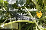 10 of the Easiest Vegetables to Grow, Even If You Live in Zone 3