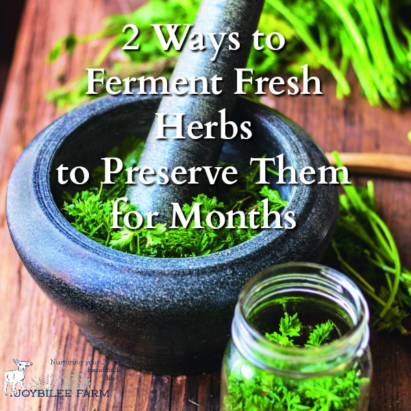 Fermented Fresh Herbs Preserve The Intense Flavor While