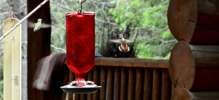 Keep the hummingbirds coming back year after year with this healthy hummingbird nectar recipe.