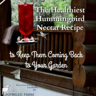 The Healthiest Hummingbird Nectar Recipe