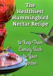 A hummingbird at a red hummingbird feeder