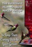 Multiple images of a hummingbird flying to a red hummingbird feeder