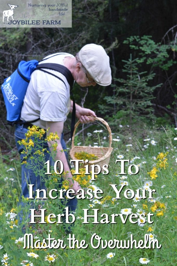 Here's a few tips to help you make the most of the herb harvest, before it's too late.