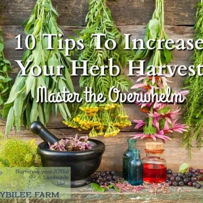 10 Tips To Increase Your Herb Harvest and Master the Overwhelm