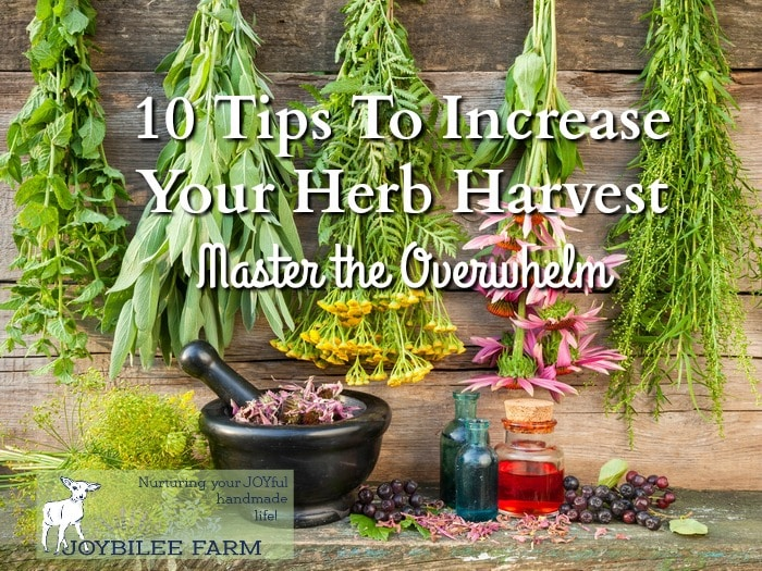 Maximize the herb harvest with these tips.