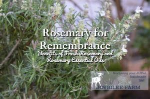 Rosemary for Remembrance, The Benefits of Fresh Rosemary and Rosemary Essential Oils