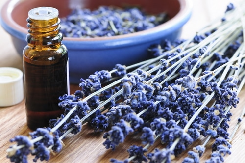 dried lavender and an essential oil bottle