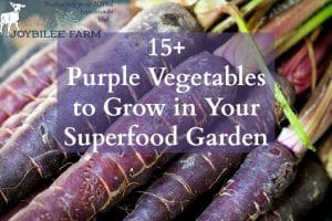 15+ Purple Vegetables to Grow in Your Superfood Garden
