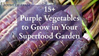 15+ Purple Vegetables to Grow in Your Superfood Garden