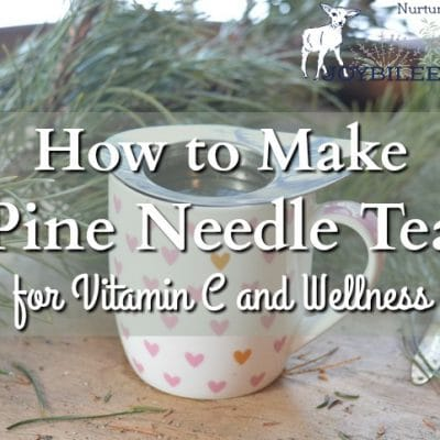 How to Make Pine Needle Tea for Vitamin C and Wellness