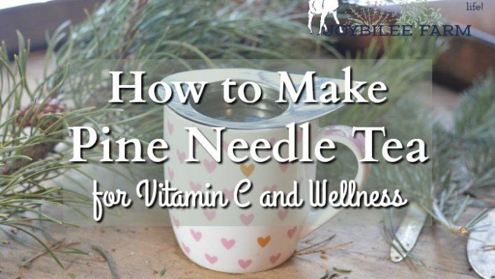 How to Make Pine Needle Tea for Vitamin C and Wellness