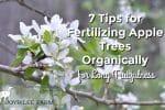 7 Tips for Fertilizing Apple Trees Organically for Long Fruitfulness