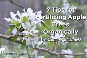 7 Tips for Fertilizing Apple Trees Organically for Long Fruitfulness