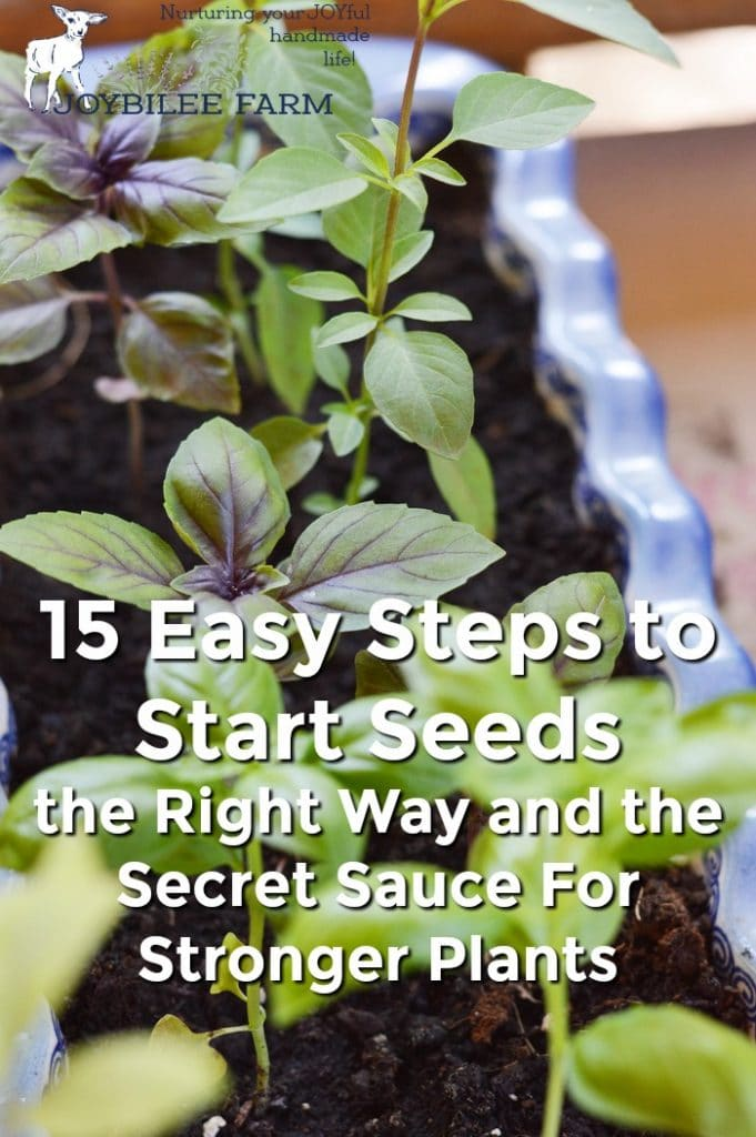 15 Easy Steps to Start Seeds the Right Way and the Secret Sauce For Stronger Plants