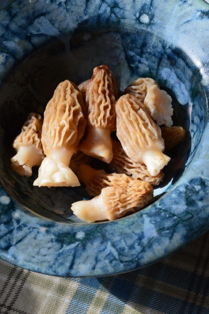 aspen morels in a clay bowl