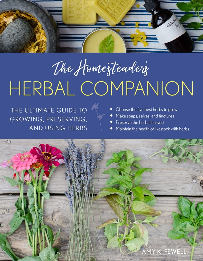 15 Medicinal Herbs for Chickens to Keep Them Healthy and