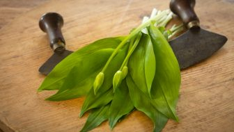 5 Edible Wild Plants of Early Spring to Hunt on Your Foraging Hike