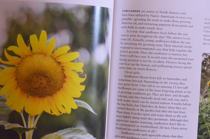 "Sunflower entry in the book ""Growing Heirloom Flowers"" by Chris MacLaughlin"