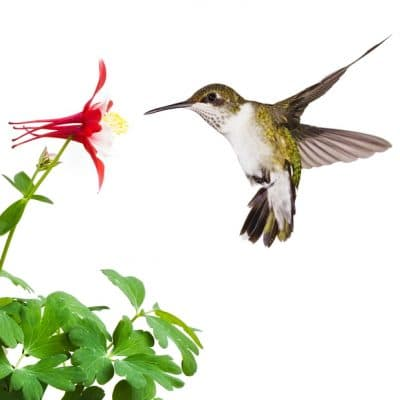 6 Ways to Create a Hummingbird Habitat in Your Garden To Keep Them Coming Back