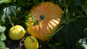 21 Tips for Zone 3 Gardening Success for a Harvest You Can Count On