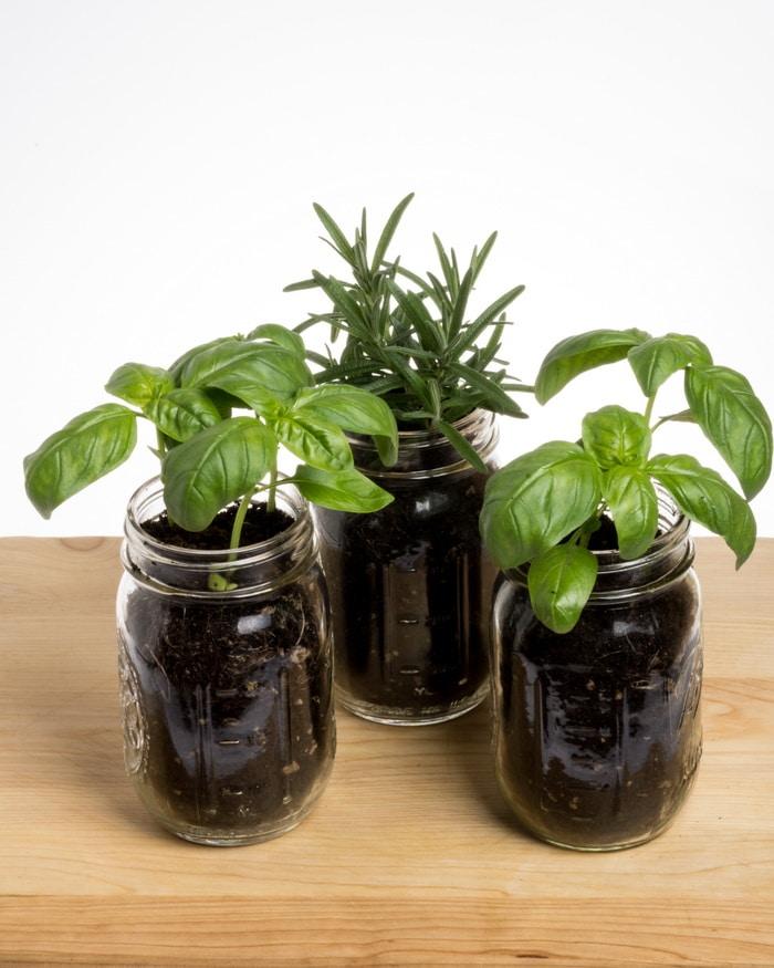 Herbs in mason jars