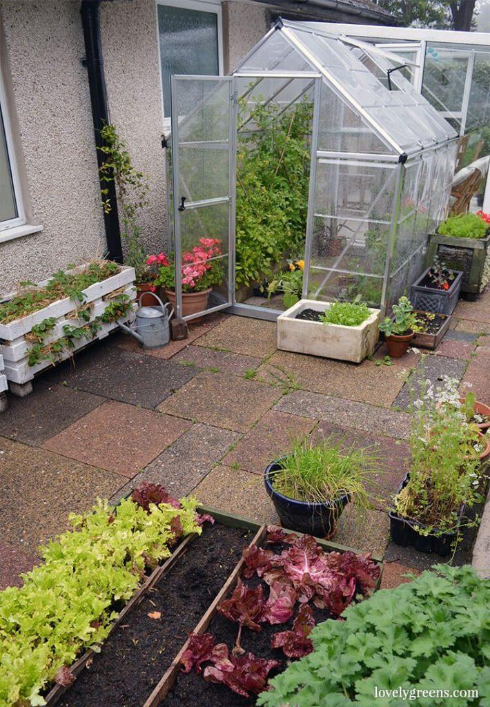 Greenhouse herbs