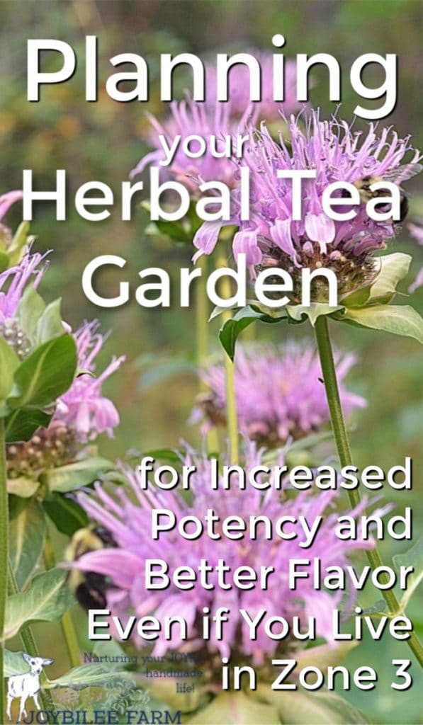 bee balm for herbal tea gardens