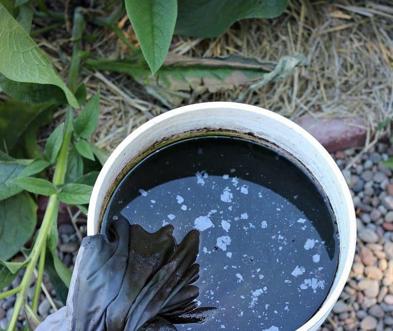 homemade comfrey compost tea