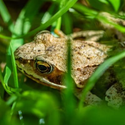 Naturally Reduce Garden Pests by Making a Frog House for Your Garden